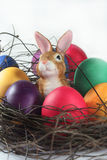 Easter basket with Easter eggs and Easter bunny Stock Photo