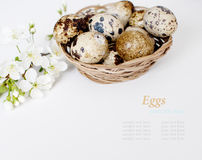 Easter basket with easter eggs on white background. Easter eggs on white background Royalty Free Stock Photography