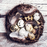 Easter basket with Easter Eggs on wooden background. Quail easte Royalty Free Stock Photos