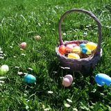 Easter Basket. Easter egg basket in grass and daisies Royalty Free Stock Photo