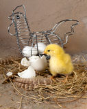 Easter basket with eggs and chick. Metal easter basket with eggs and yellow little chick Stock Photo