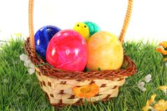Easter basket with eggs and chicks Royalty Free Stock Image