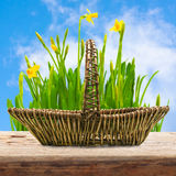 Easter  basket empty wooden table Stock Images