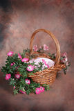 Easter Basket Floral Fantasy Studio Set (Insert Isolated Client) Royalty Free Stock Images