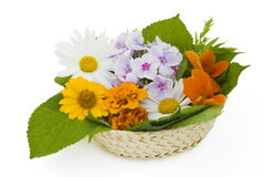 Easter basket with flowers Stock Images