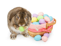 Easter basket with pastel colored plastic eggs Stock Photo
