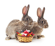 Easter basket and rabbits. Royalty Free Stock Images