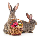 Easter basket and rabbits. Stock Photos