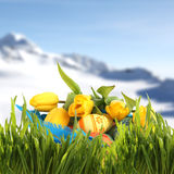 Easter basket in spring mountains. Easter basket with colored eggs and yellow tulips in spring mountains Stock Photos