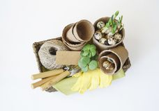 Easter. A basket with tools for transplanting plants. Bird`s nest with quail eggs. Plants in pots. Work gloves. White background Stock Image