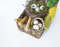 Easter. A basket with tools for transplanting plants. Bird`s nest with quail eggs. Plants in pots. Work gloves. White background Royalty Free Stock Image