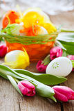 Easter basket and tulips on wooden board Royalty Free Stock Images