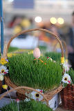 Easter baskets with grass Stock Image