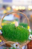 Easter baskets with grass Stock Photography