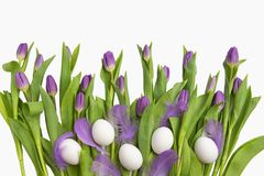 Easter.Beautiful light purple tulips with Easter eggs and feathers isolated on white background. Spring flowers and plants. royalty free stock images