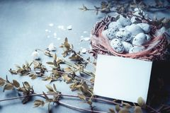 Easter with blank paper card , nest with bird eggs and spring twigs and flowers. Mock up for greeting card Stock Images