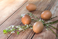 Easter - Blooming Branches with Four Eggs Stock Photos