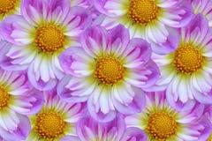 Easter Bonnet Flowers Royalty Free Stock Image