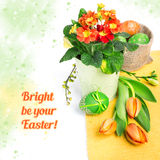 Easter border with orange tulips and primulas on white. Easter border with orange tulips, primluas and spring decorations, space for your text Royalty Free Stock Photography
