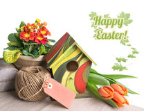 Easter border with orange tulips and primulas on white Stock Image