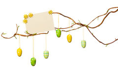 Easter Branches - with Easter Eggs, Blank Sign / Card, Isolated Stock Images