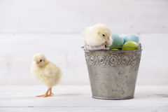 Easter bucket with eggs and chickens on it Stock Photo