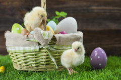Easter bucket with eggs, young easter chickens around Royalty Free Stock Photos