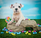 Easter Bulldog Puppy Royalty Free Stock Photo