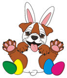 Easter bulldog with rabbit ears Royalty Free Stock Photography