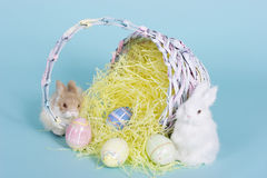 Easter bunnies. With a wooden basket and two easter eggs Royalty Free Stock Image