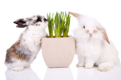 Easter bunnies. Cute little easter bunnies on white background with spring flowers Stock Photo