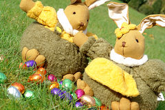 Easter bunnies and chocolate eggs. A male and a female bunny in the garden with chocolate eggs in multi colored foils Royalty Free Stock Photography