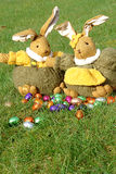 Easter bunnies and chocolate eggs. A male and a female bunny in the garden with chocolate eggs in multi colored foils Royalty Free Stock Images