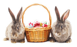 Easter bunnies with colored eggs. Royalty Free Stock Photo