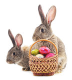 Easter bunnies with colored eggs. Royalty Free Stock Photography