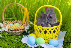 Easter bunnies in Easter basket with easter colored eggs. On grass background Royalty Free Stock Photos