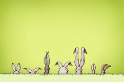 Easter bunnies on a green meadow Royalty Free Stock Photo
