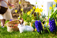 Easter Bunnies on meadow with basket and eggs Stock Images