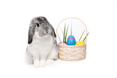 Free Easter Bunny Stock Images - 11130474