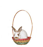 Easter Bunny. Bunny rabbit in an empty Easter basket royalty free stock images