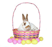 Easter Bunny. An Easter bunny sitting comfortably in an Easter basket, surrounded by pink and yellow eggs. Isolated on white background royalty free stock photo