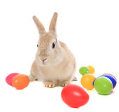 Easter bunny. Cute little easter bunny standing within easter eggs. All on white background royalty free stock images