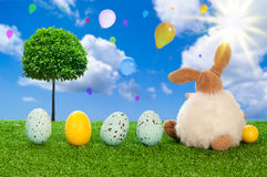 The Easter Bunny Royalty Free Stock Images