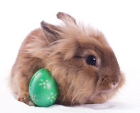 Easter bunny. Cute bunny with green easter egg on white tissue Stock Photo