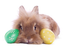 Easter bunny. Cute bunny with easter eggs  on white Stock Image