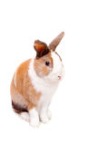 Easter Bunny. Beautiful  white decorative fluffy Easter Bunny on a white background Royalty Free Stock Photos