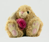 Easter Bunny. Fluffy Easter bunny with a pink rose Royalty Free Stock Images