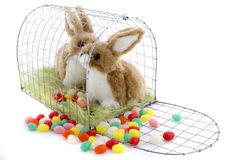 Easter Bunny. Cloth bunnies for Easter were in a cage locked up Stock Photography