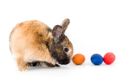 Easter bunny. A rabbit with multicolored eggs isolated on white Stock Image