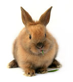 Easter bunny. Isolated cute easter rabbit on white background Stock Image